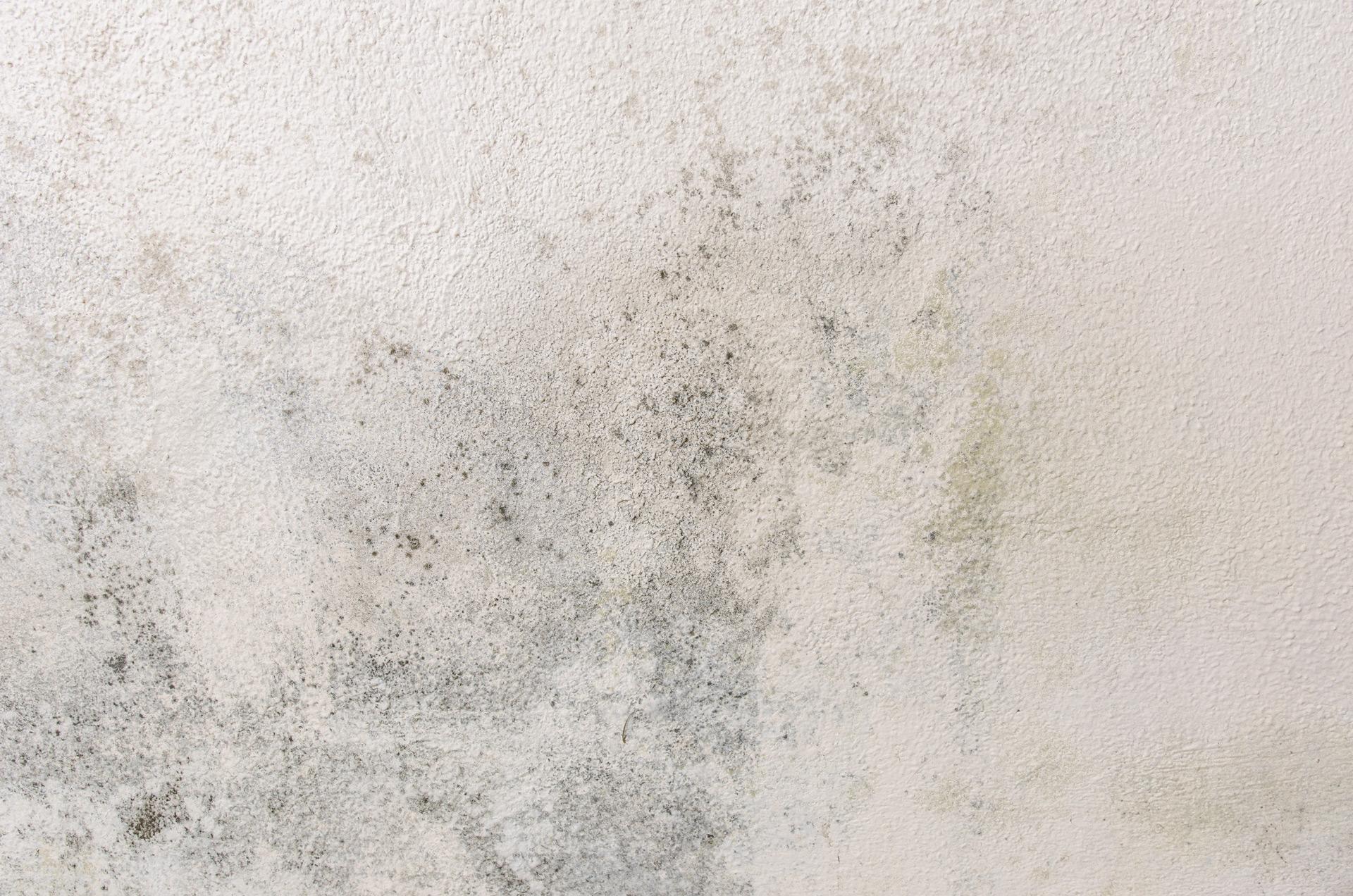 humidite-mur-salle-bain